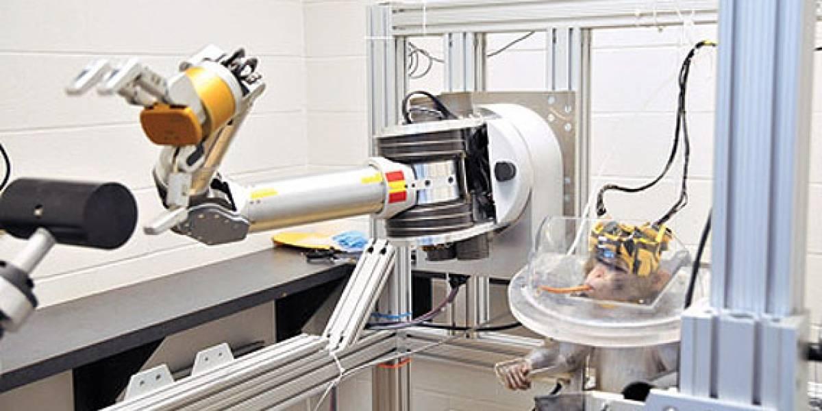 Simio controla brazo y mano robot con el cerebro (Video)