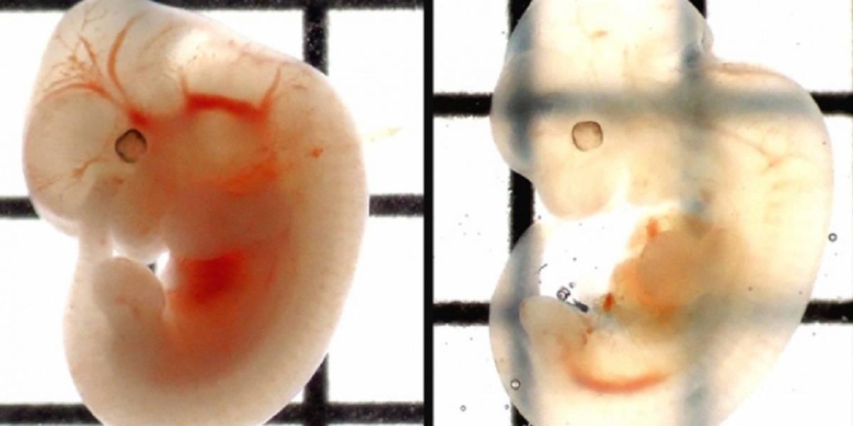 Revelan sorprendente técnica para aclarar tejidos biológicos