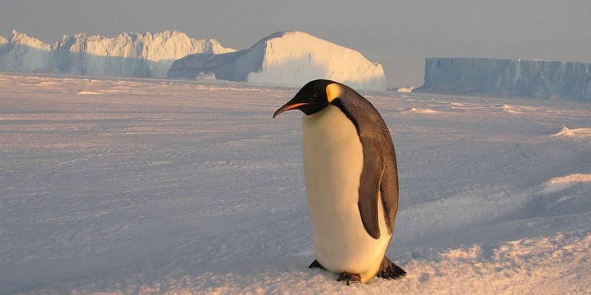 Google Street View llega a la Antártica