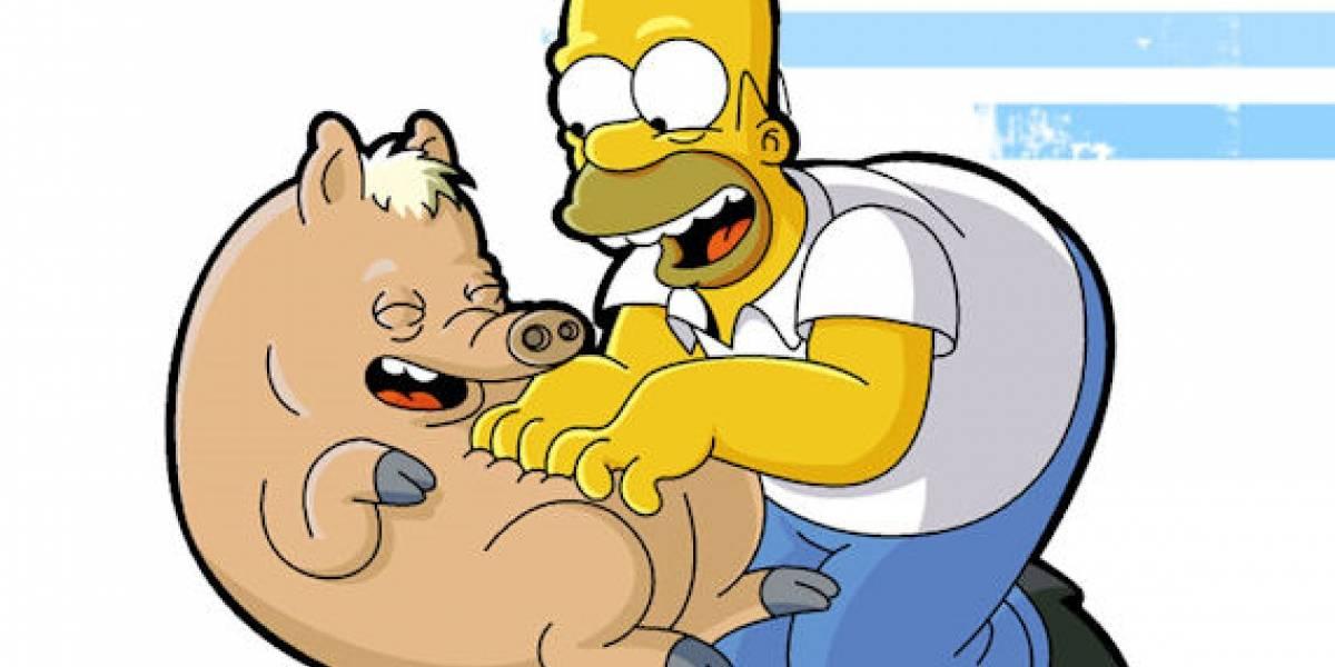 Cerdos modificados genéticamente podrían ser donantes de órganos