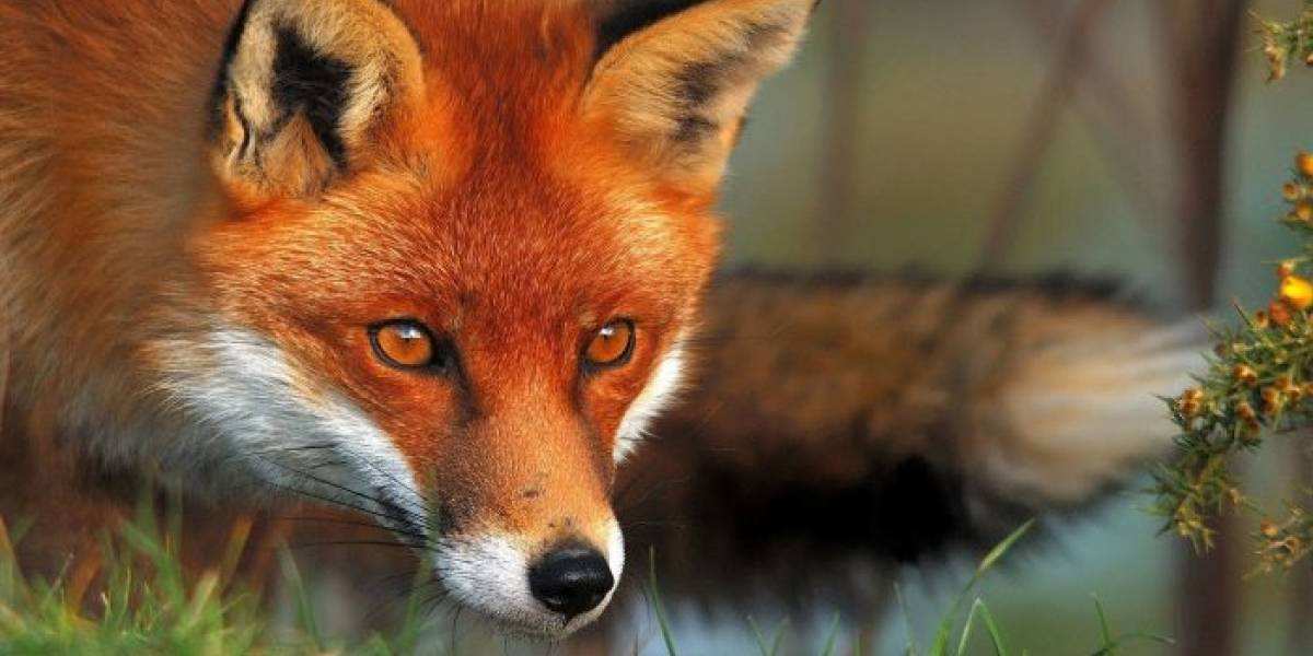 Firefox Quantum lanza versión para protegerse de Meltdown y Spectre
