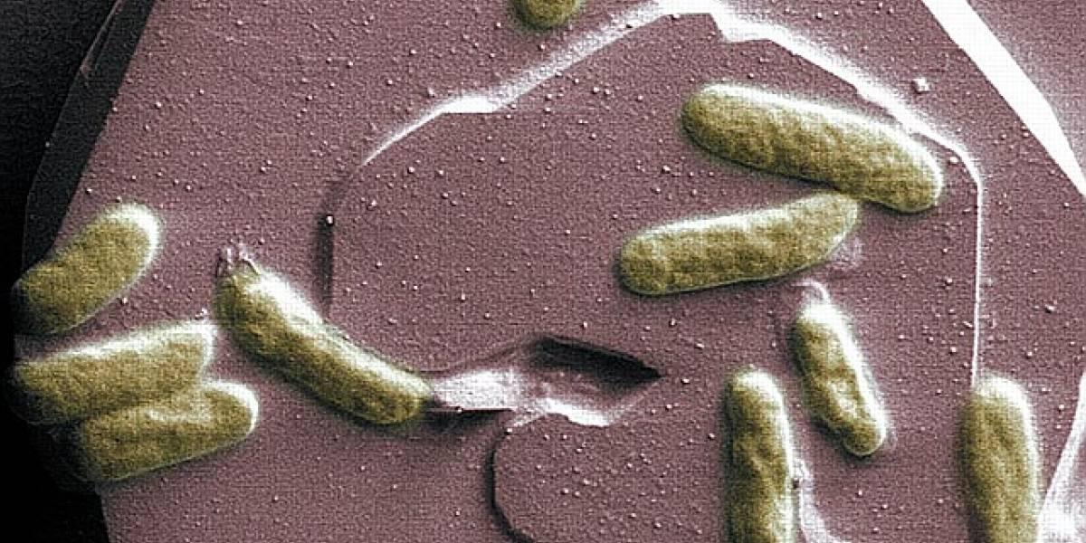 Bacterias que inhalan metales tóxicos y los exhalan no tóxicos