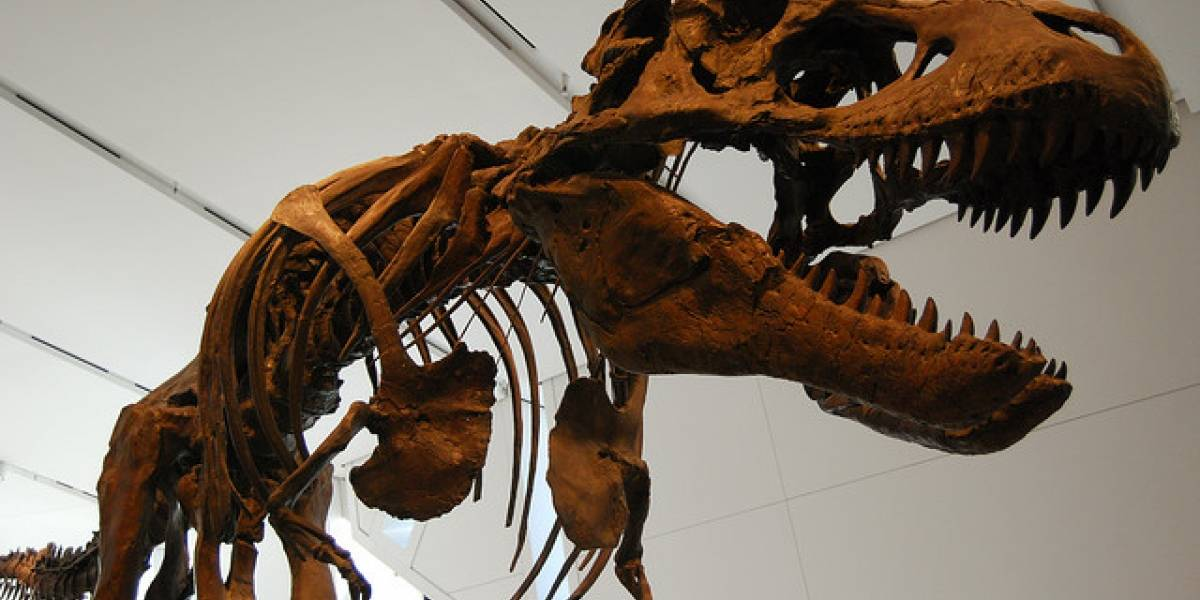 El cráneo de un dinosaurio reconstruido en 3D