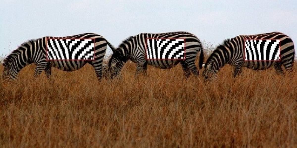 Biólogos crean lector de código de barras para cebras