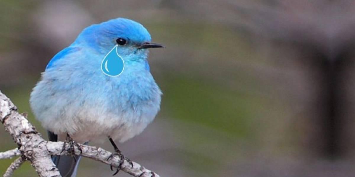 Twitter es demandado por TWiT, un podcast de tecnología