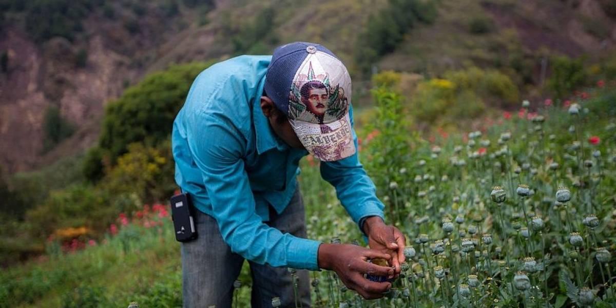Coca o carretera, el dilema que enfrentan los campesinos colombianos