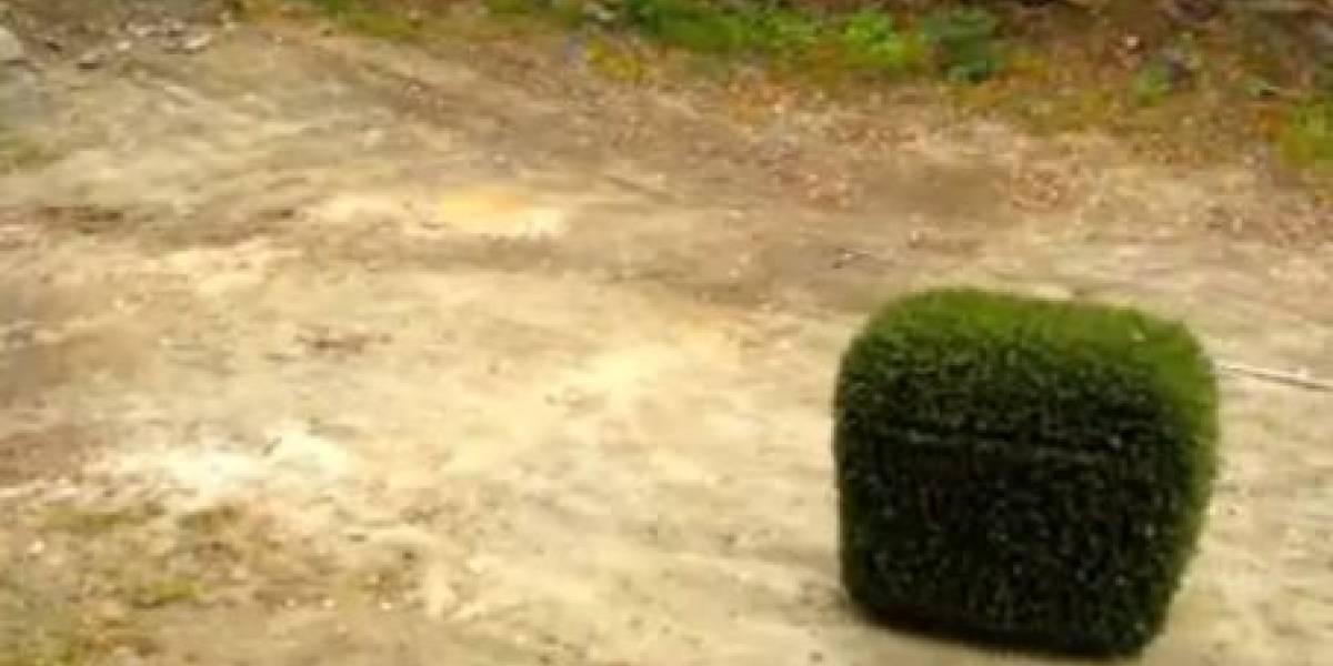 Arbustomóvil, el mejor auto espía