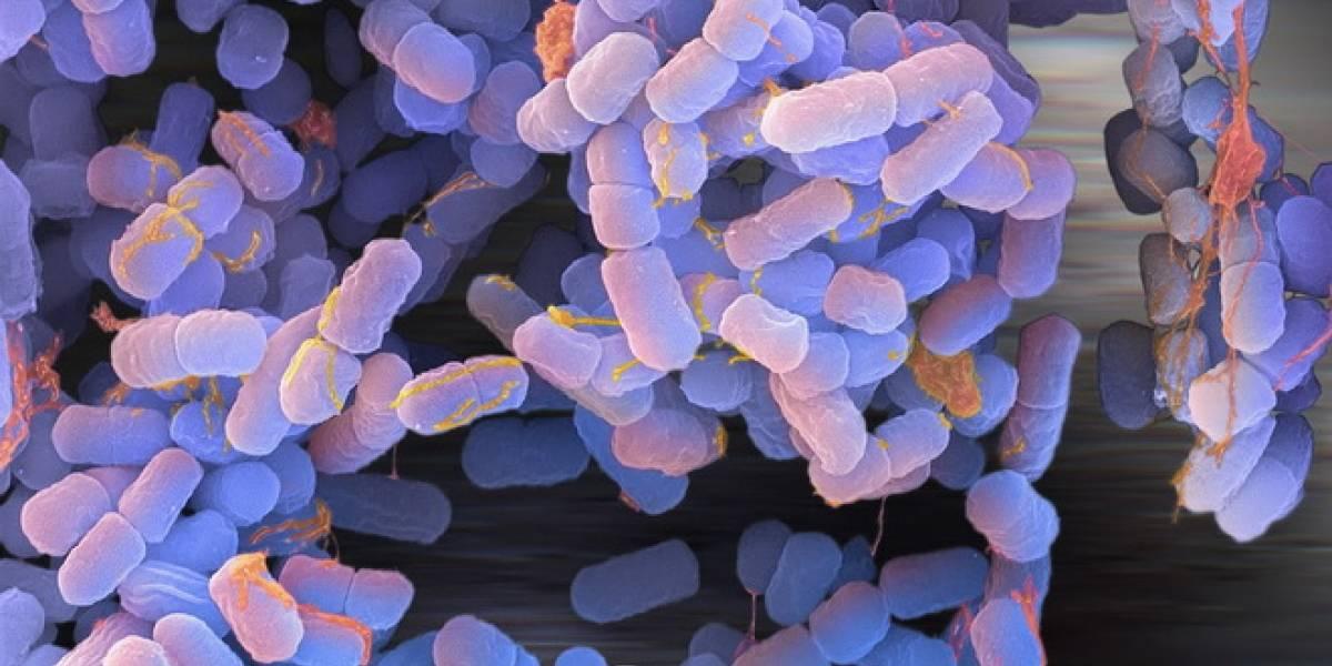 México: Científicos logran modificar el ADN de las bacterias