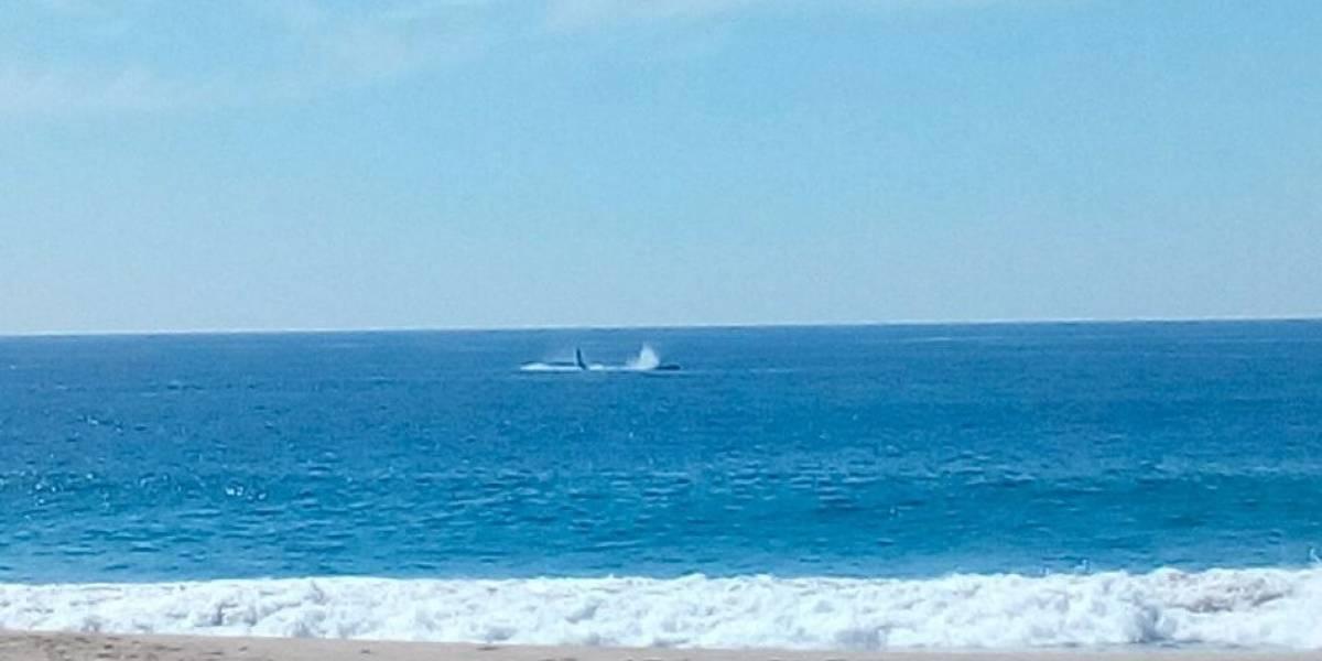 Avistan ballenas frente a las costas de ¡Acapulco!
