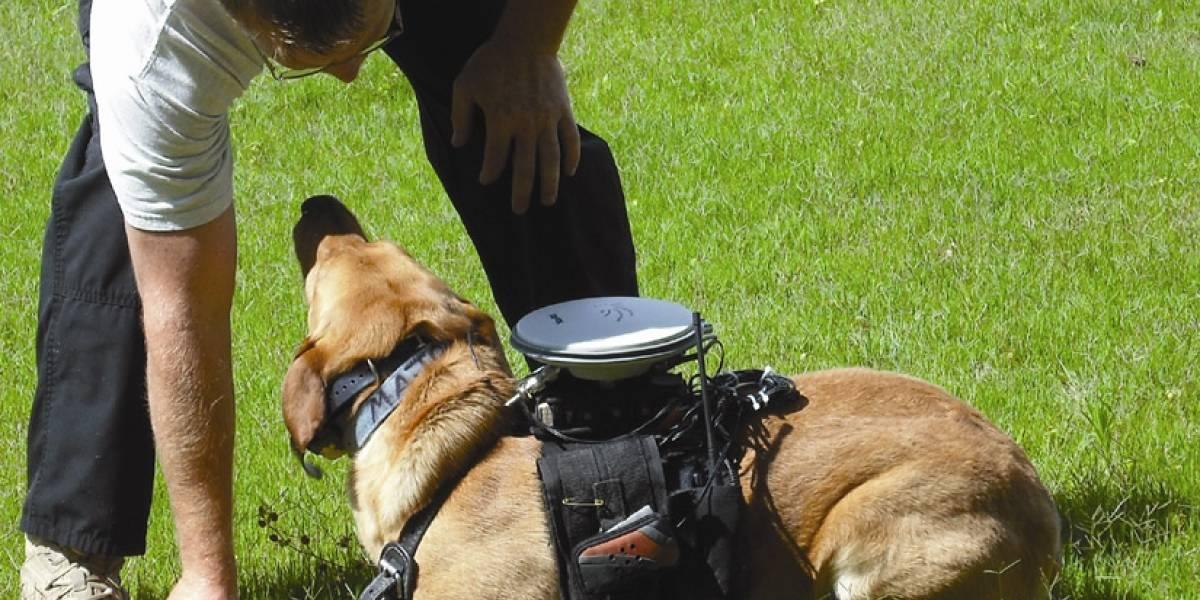 Ahora se puede dar órdenes al perro a control remoto