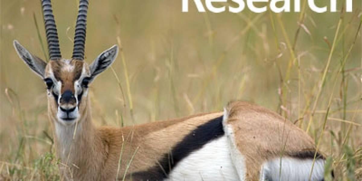 Microsoft Gazelle: Navegador ultraseguro