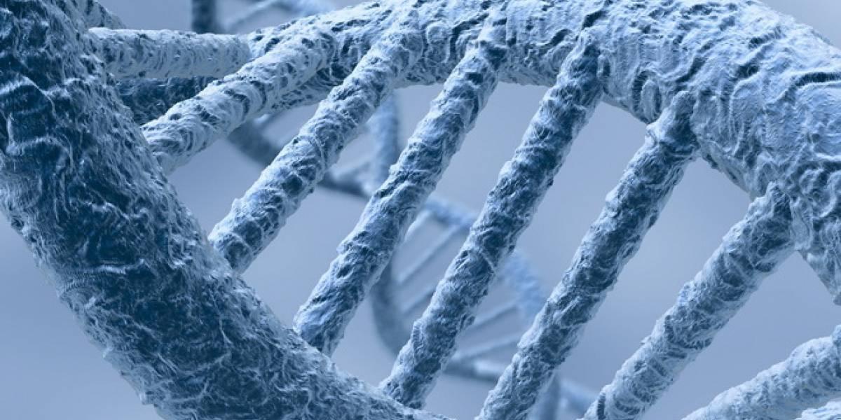 Tenemos un gen que sabe cuando moriremos