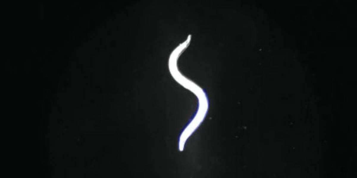 Científicos controlan funciones de los gusanos mediante láser