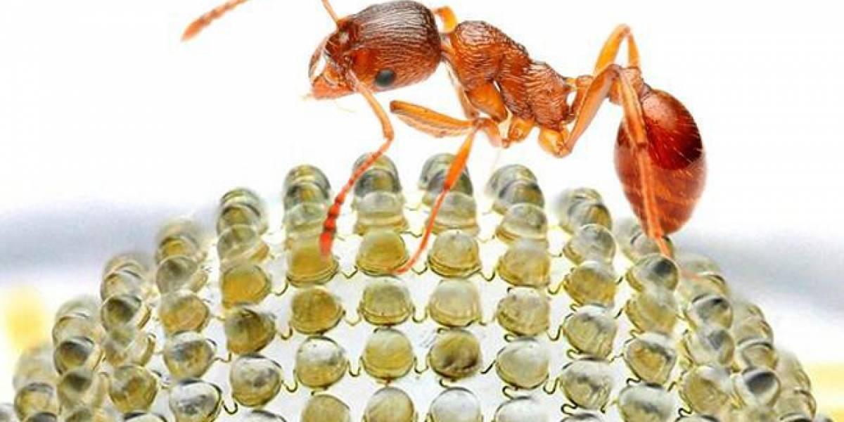 Científicos crean cámara inspirada en los ojos de los insectos