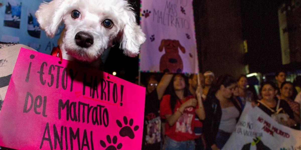 Maltrato animal: ¿falla de la ley o falta de educación?