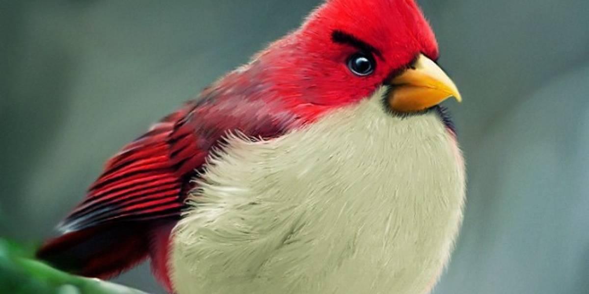 Así serían los Angry Birds si fueran pájaros furiosos de verdad