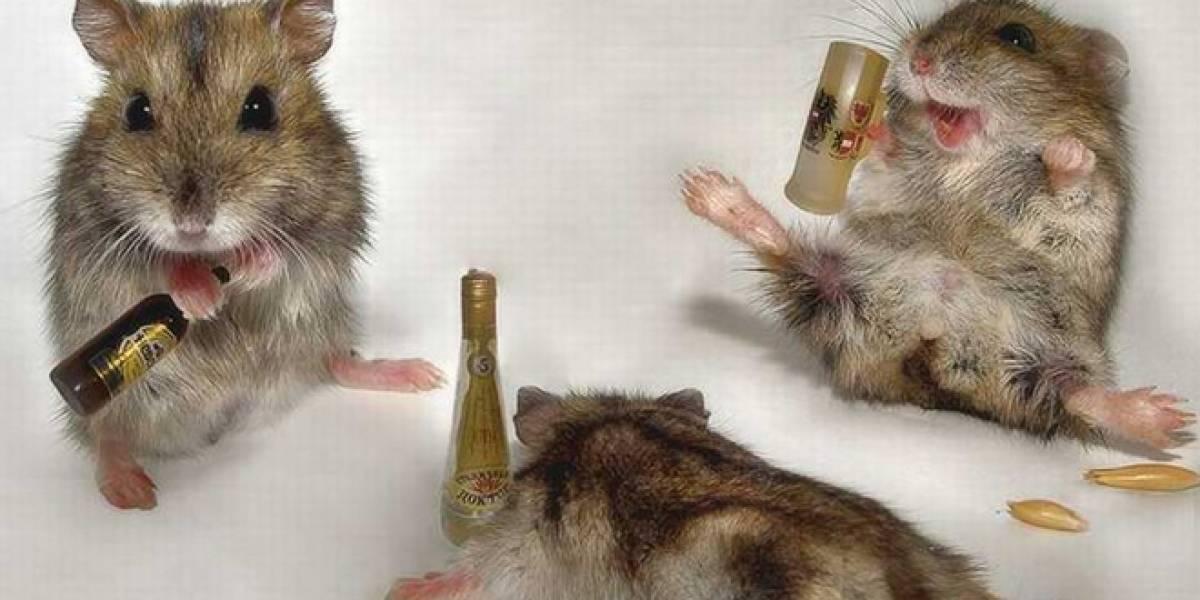 Nanocápsulas dejan casi instantáneamente sobrios a ratones borrachos