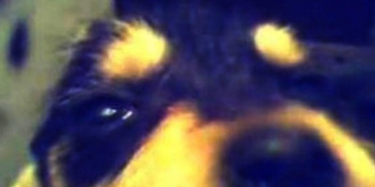España: Internautas se movilizan para capturar a un asesino de cachorros