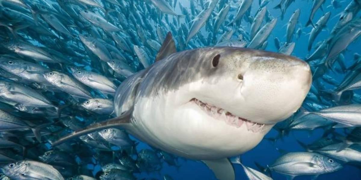 Horroroso descubrimiento: encontraron 300 tiburones muertos, mutilados y masacrados a un costado de una carretera en México