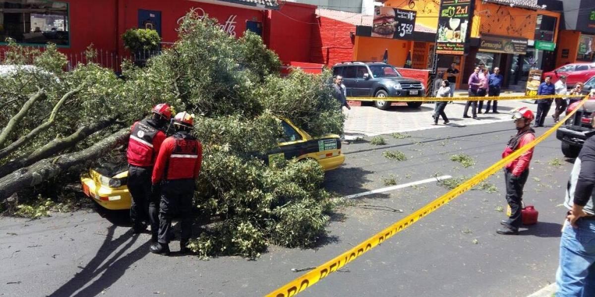Bomberos de Quito reportan dos árboles caídos en la avenida Eloy Alfaro