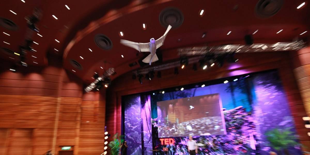 SmartBird cautiva a la audiencia durante una demostración pública en el TEDGlobal 2011
