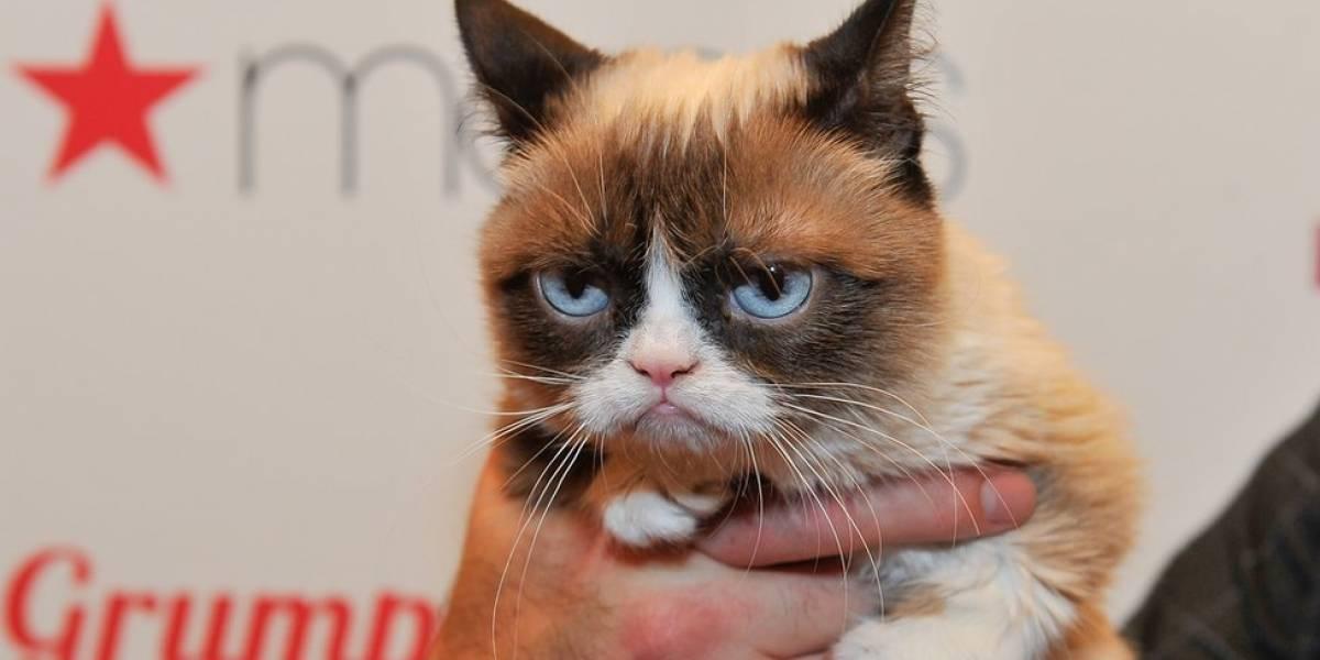 Grumpy Cat, gata emburrada estrela na internet, ganha R$ 2,2 milhões em ação por direitos de imagem