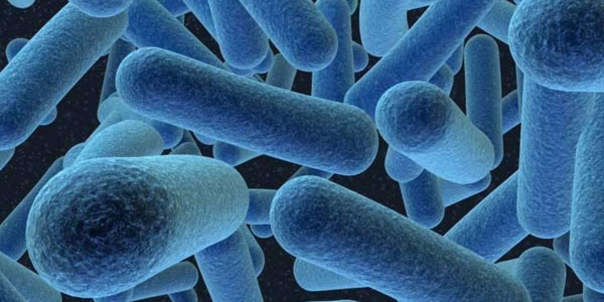 La bacteria E.Coli aparecida en Alemania se comporta como pegamento