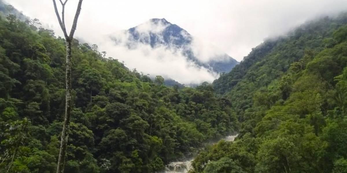 Ecuador: nuevo Parque Nacional Río Negro-Sopladora protegerá 546 especies