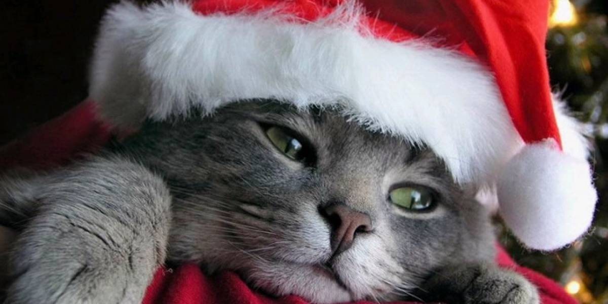Navidad Niubie: Daniel