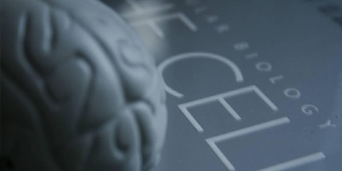 Celdas de combustible en base a glucosa podrían darle energía a los implantes cerebrales del futuro