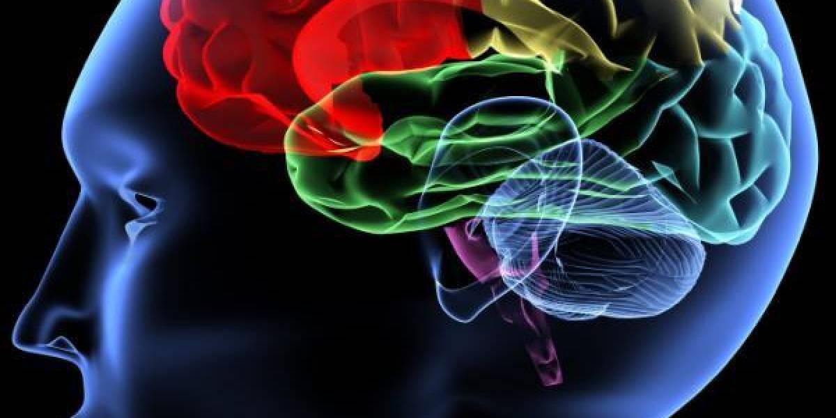 IBM diseña un procesador que pensará como el cerebro