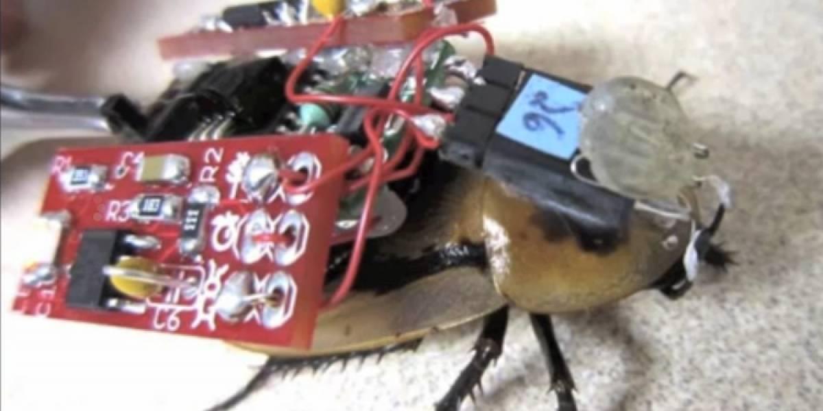 Controlan cucarachas a control remoto
