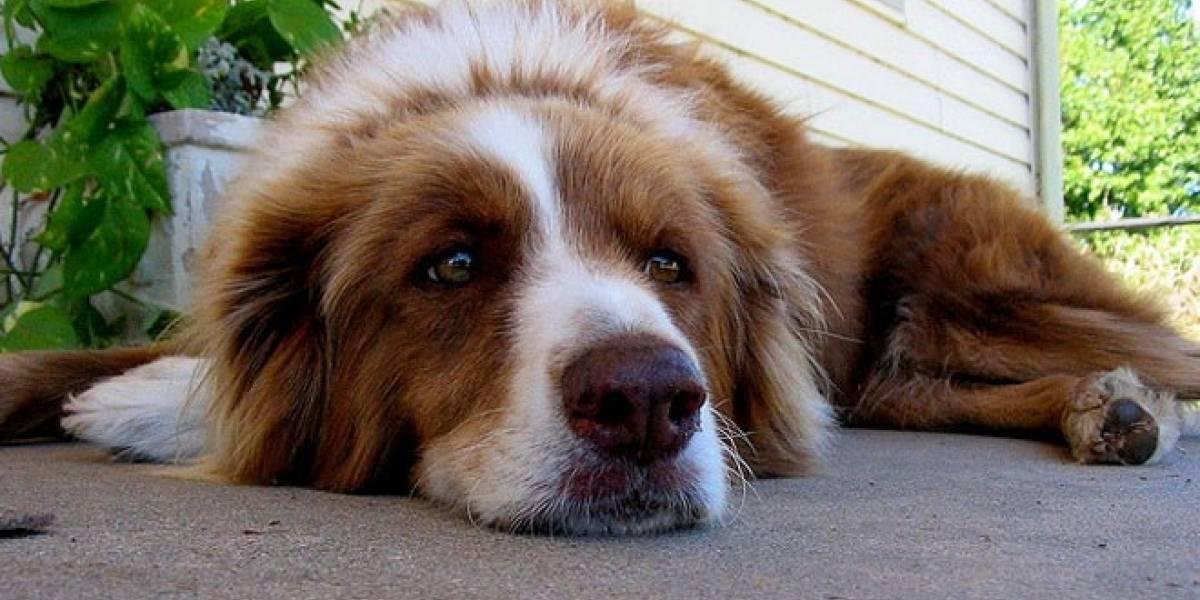 Fujitsu anuncia un sensor para controlar la salud de las mascotas desde el móvil