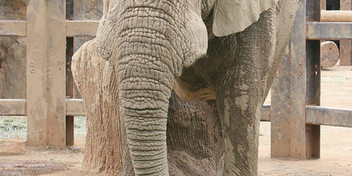 Namecheap recaudó US$20.000 para los elefantes después del video de GoDaddy