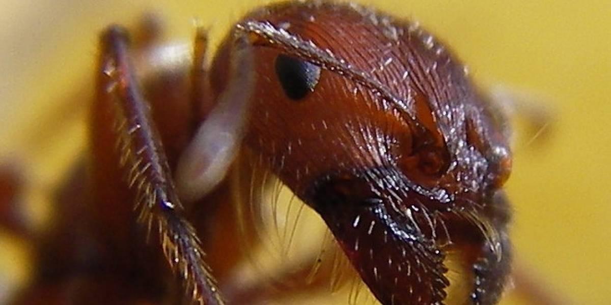 Estudio descubre que las hormigas y la Internet tienen mucho en común