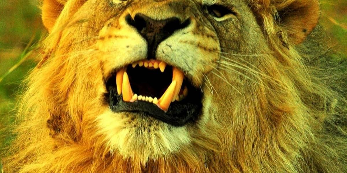 Lion ha sido descargado un millón de veces, según Apple