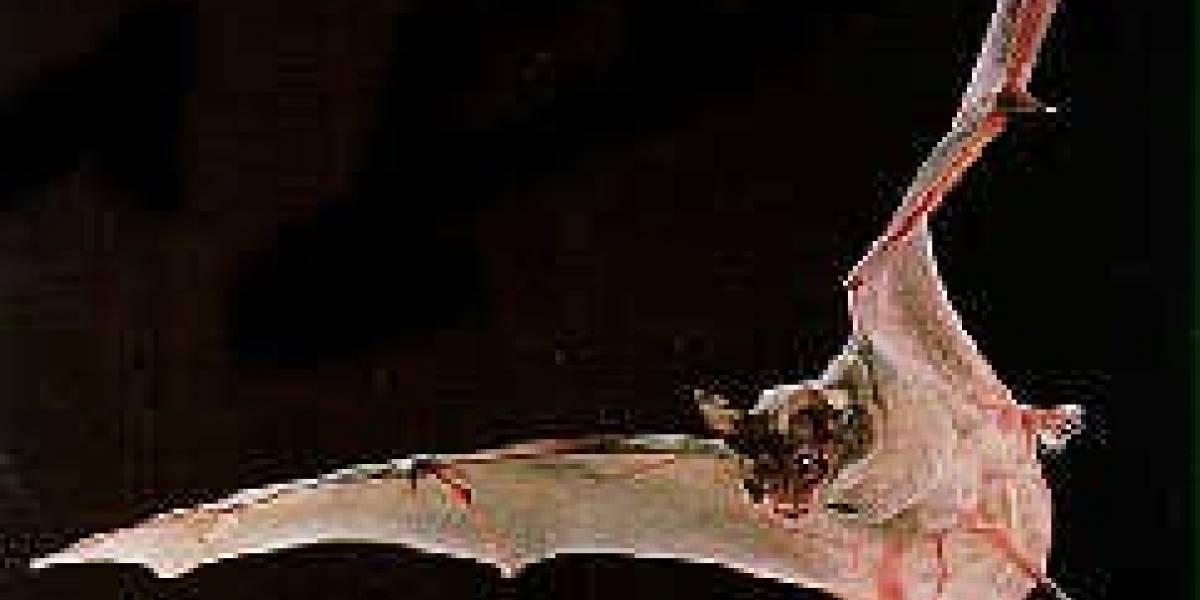 500.000 murciélagos son capturados con cámaras infrarrojas al salir de su cueva