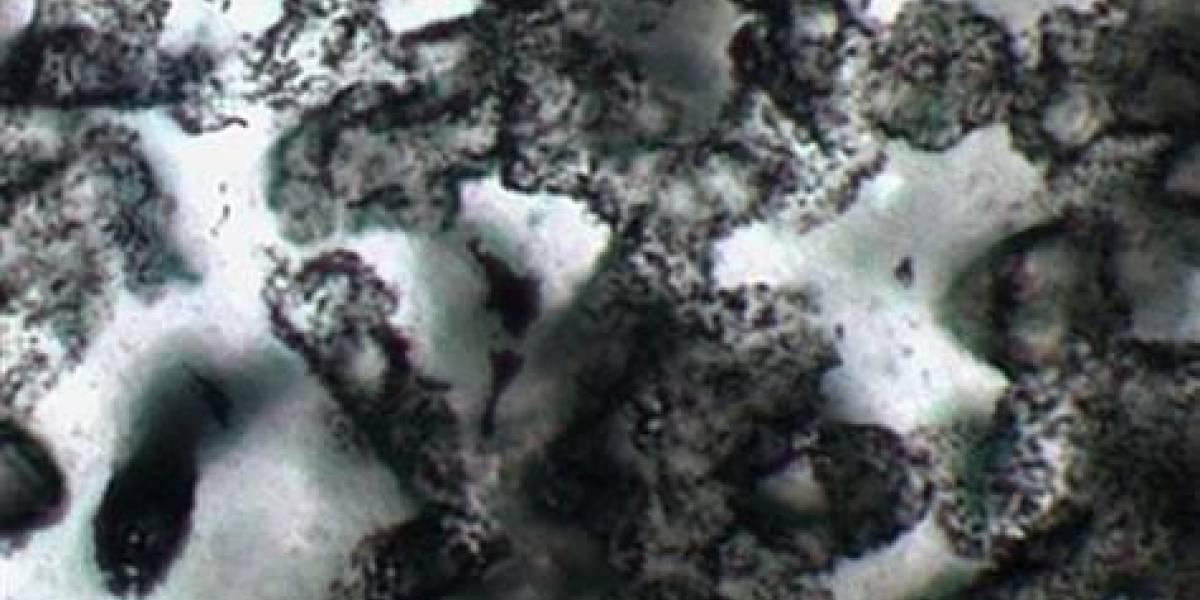 Hallazgo de fósiles en Australia sugiere que la vida en Marte es posible