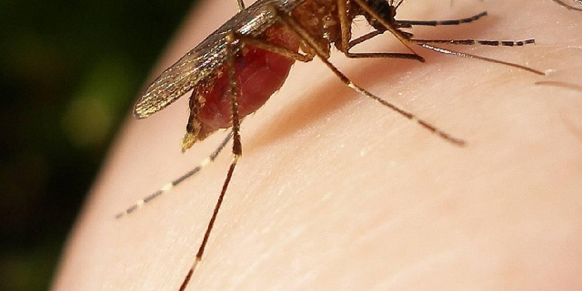 Brasileños usarán Twitter para rastrear el dengue