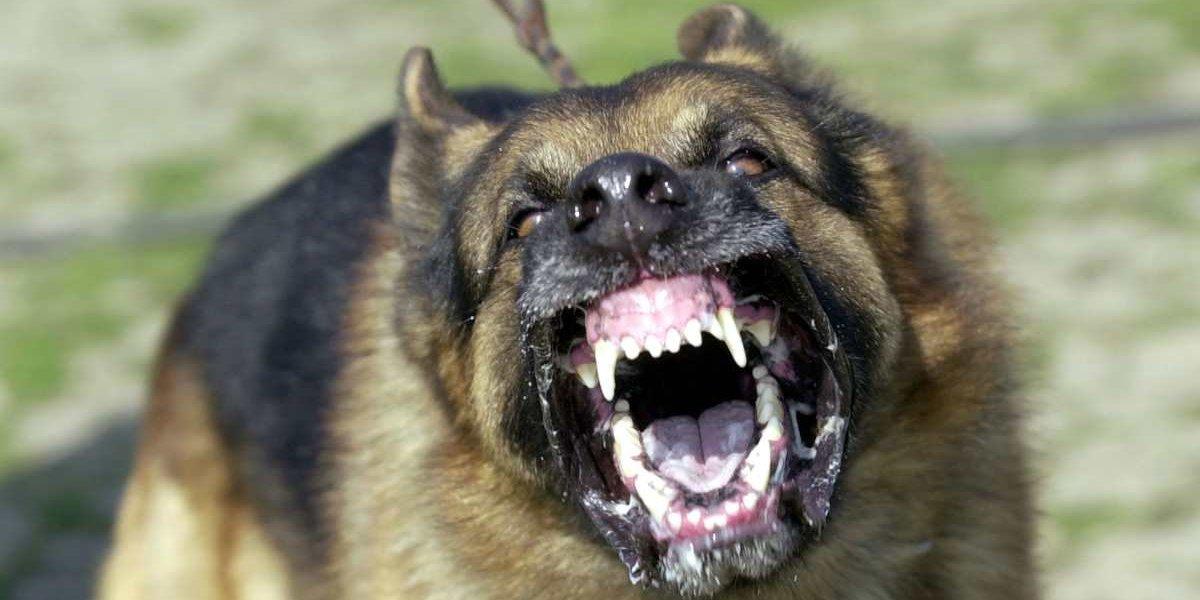 Consternación en India por perros callejeros que atacaron y mataron a una bebé de 14 meses