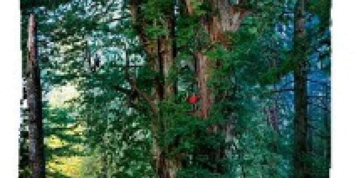 Crean una cámara para fotografiar un árbol de 92 metros
