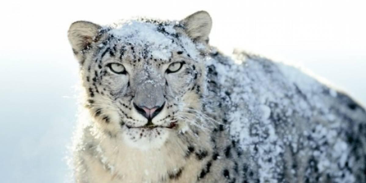 Mac OS X Snow Leopard lanzado oficialmente