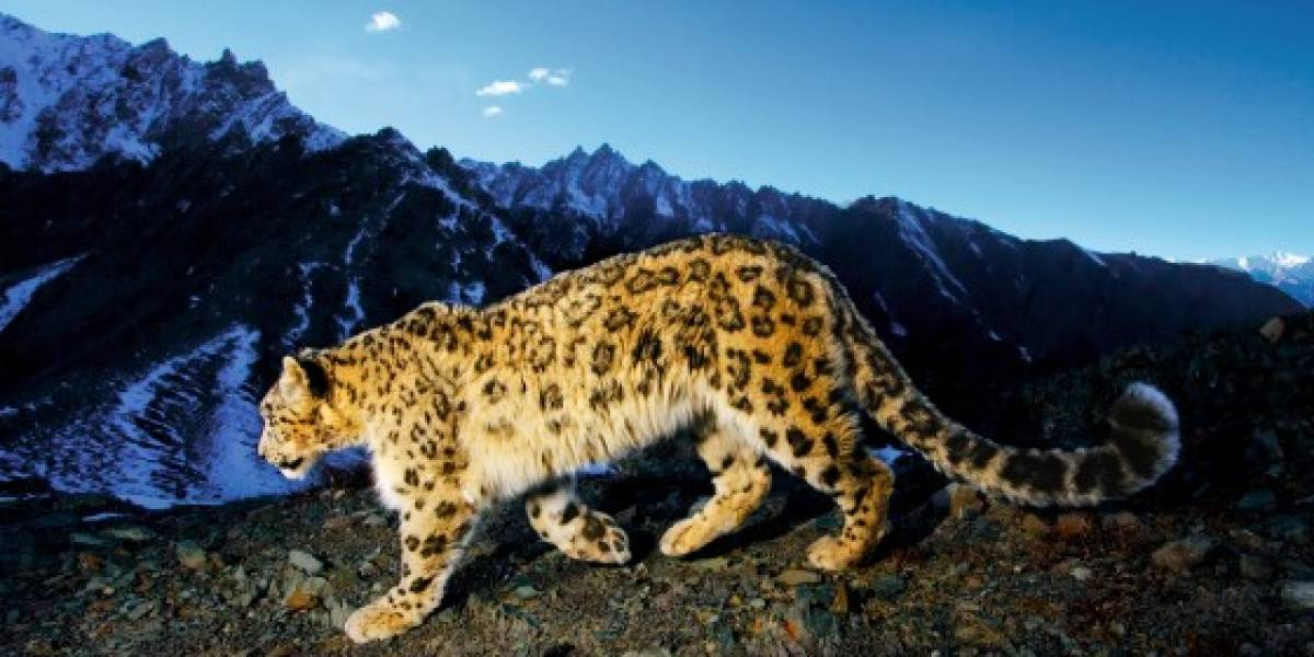 Snow Leopard 10A421 enviada a desarrolladores