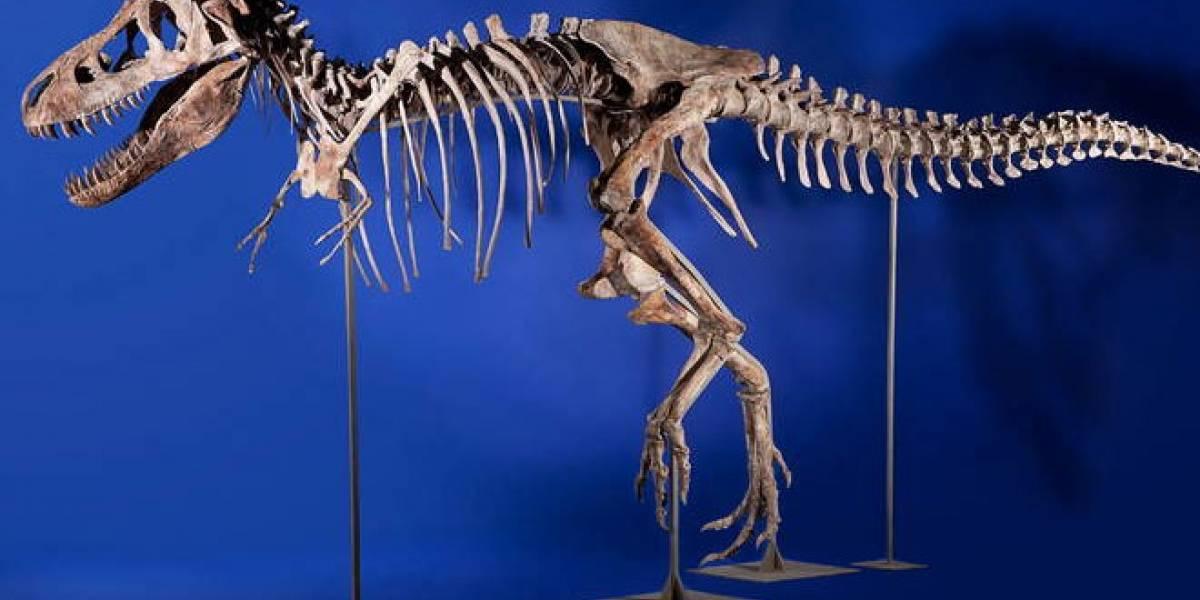 El esqueleto de un Tiranosaurio será subastado en Internet