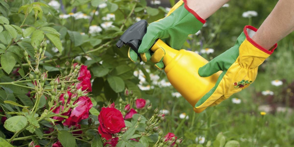 Al irte o en vacaciones: Cuidados del jardín en verano