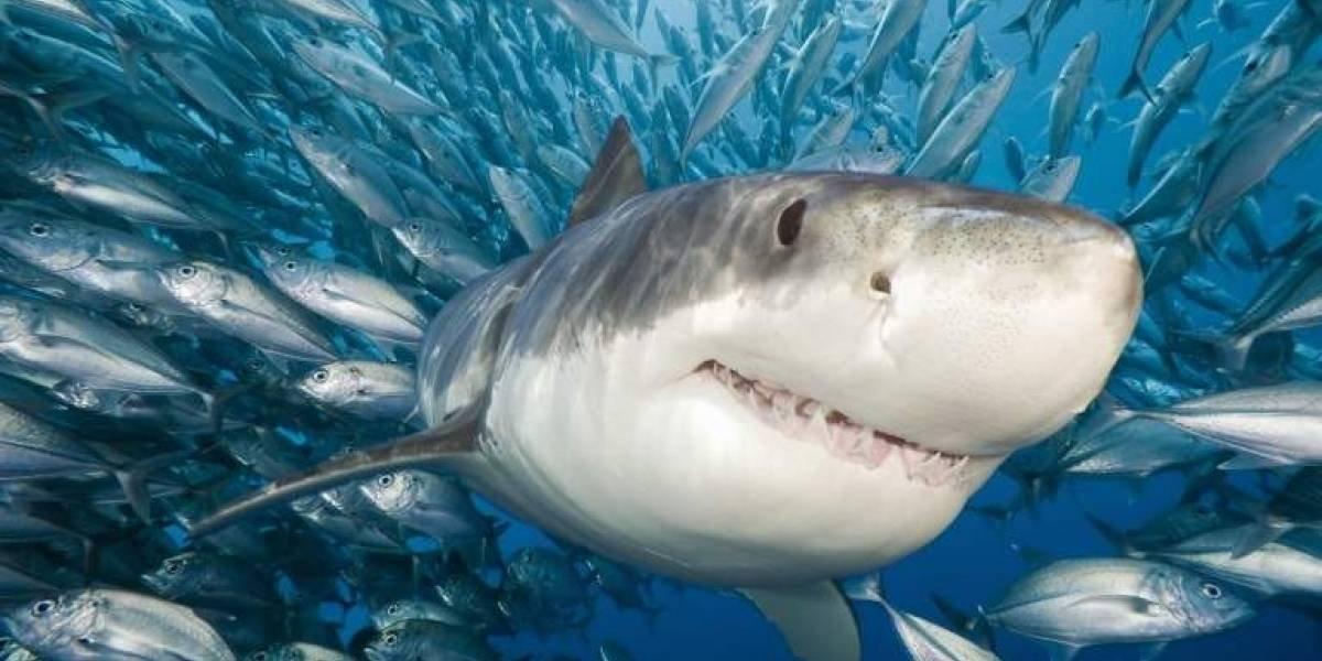 300 tubarões foram encontrados mortos, mutilados e massacrados no México