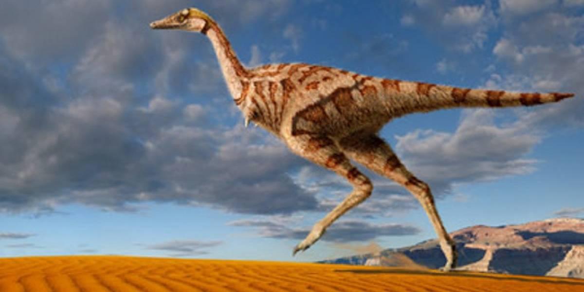 El estudio que relaciona a los dinosaurios de hace 200 millones de años con las gallinas de Guinea