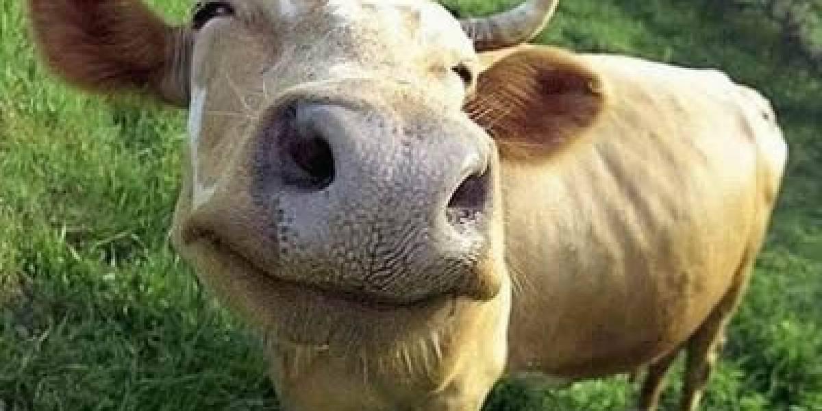 Irlandeses desarrollan método para saber qué comió la vaca que ahora tú vas a comer