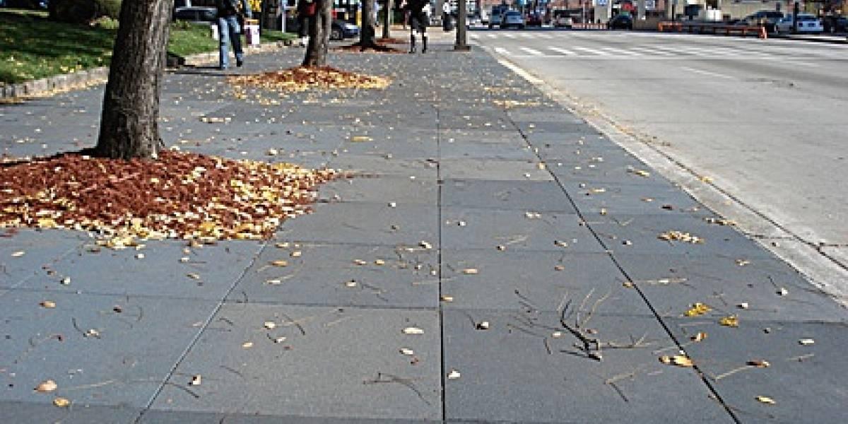 Veredas de caucho salvan árboles