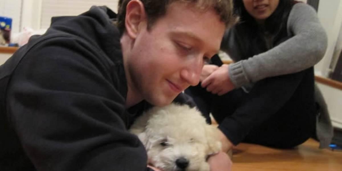 FW Pregunta: ¿Por qué les hacemos cuentas de Facebook y Twitter a nuestras mascotas?